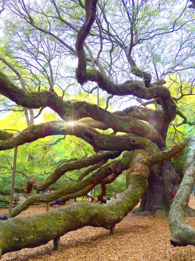 Angel Oak Light Lens