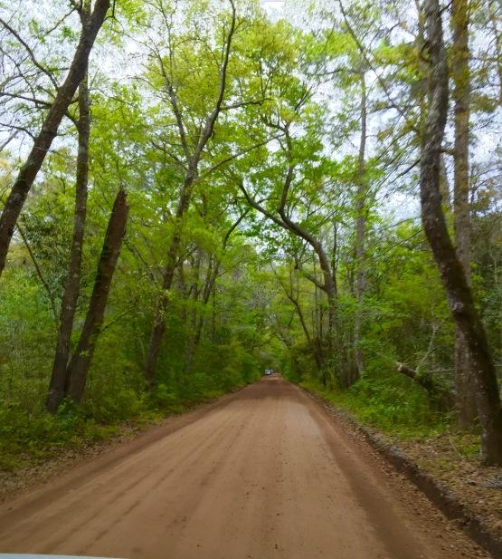 Road to ange OAk