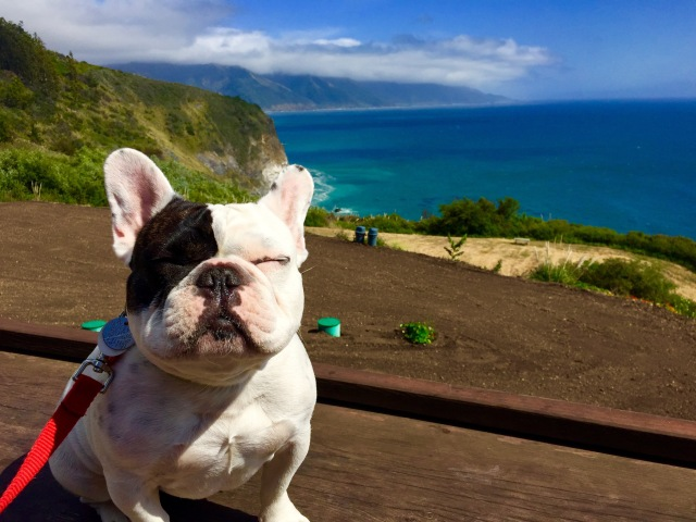Someone needed sunglasses on the seaside cliffs at Lucia Lodge in Big Sur, CA